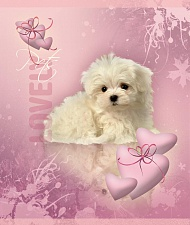 "Т. 12 л. кл.""My lovely Pets"" глиттер арт.ТШ12К9248/Г/6"