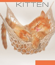 "Блокнот А7 40 л. в кл.""Ginger kitten"" арт.Б40А7М202/6"